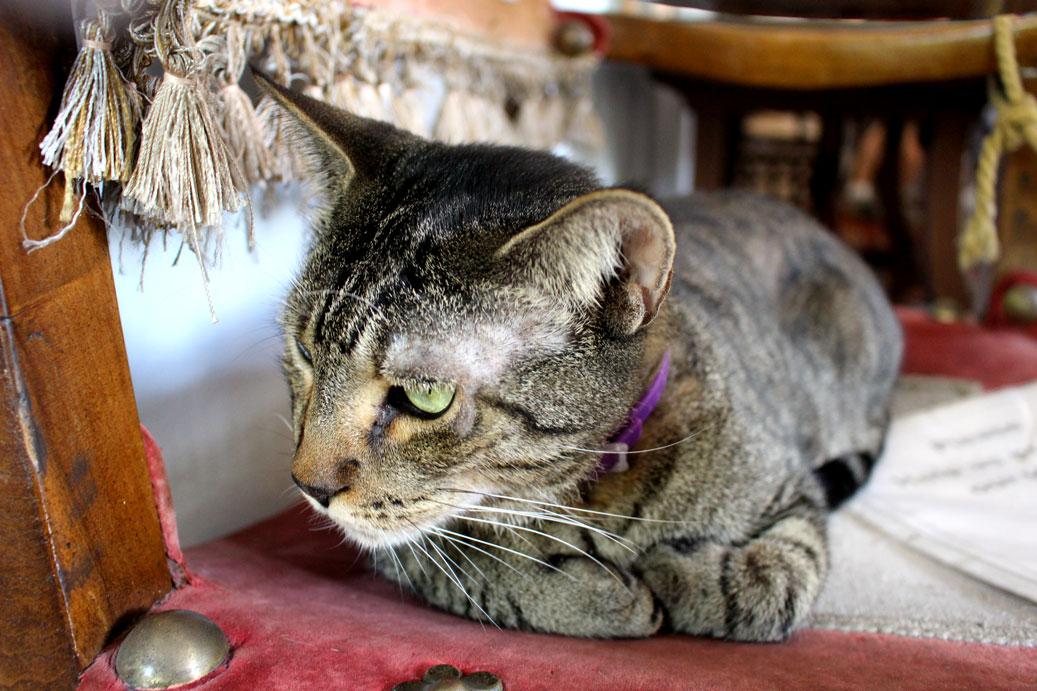 hemmingwaycat