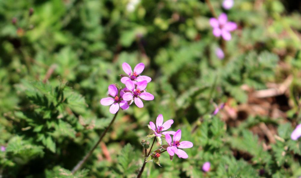 flower_yumiid.com