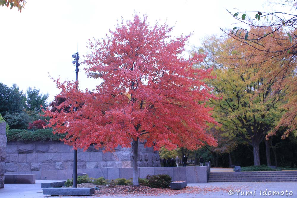autumn_leaves_in_dc-yumiid.com-10