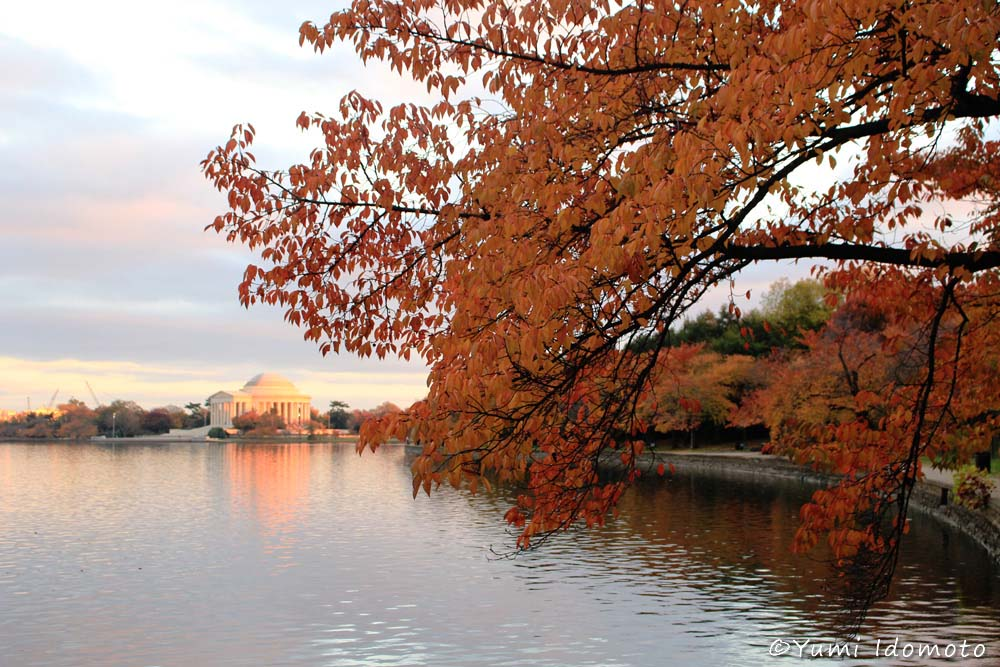autumn_leaves_in_dc-yumiid.com-12