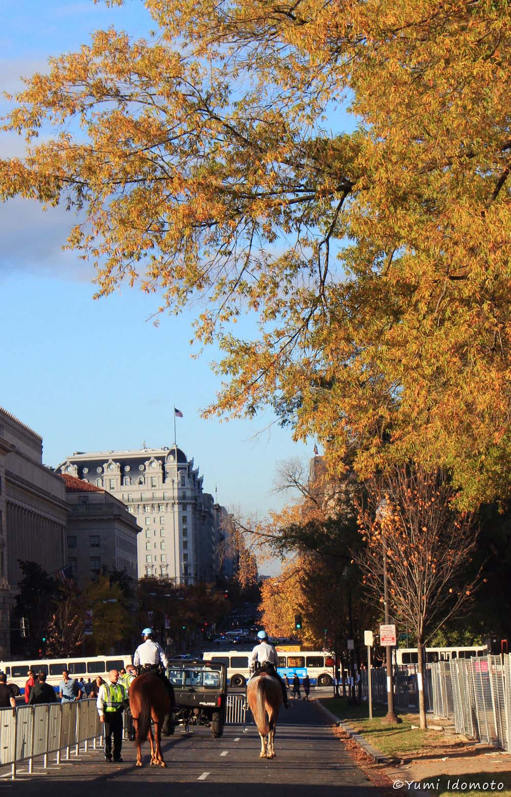 autumn_leaves_in_dc-yumiid.com-3