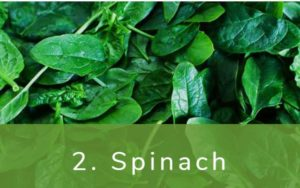 ほうれん草-Dirty Dozen(ダーティーダズン)-野菜って全て有機(オーガニック)がいいの?農薬の影響を受けやすい野菜と果物リスト