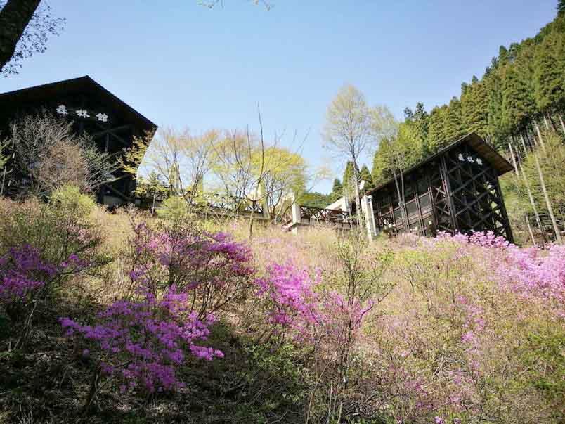 森林館-東京とは思えない!檜原都民の森で森林セラピーロードを歩いてきたよ-yumiid.com