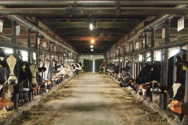 -牛乳やヨーグルトをよく食べる人が知っておきたい乳製品のリスク-yumiid.com
