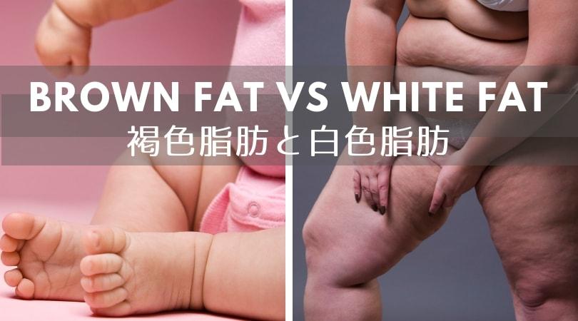 全ての脂肪細胞は同じではない?!褐色脂肪組織って何?