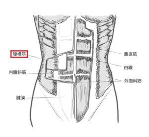 腹横筋とは-妊娠中に腹筋はどうやって鍛えたらいい?腹横筋の筋トレと鍛えることのメリット
