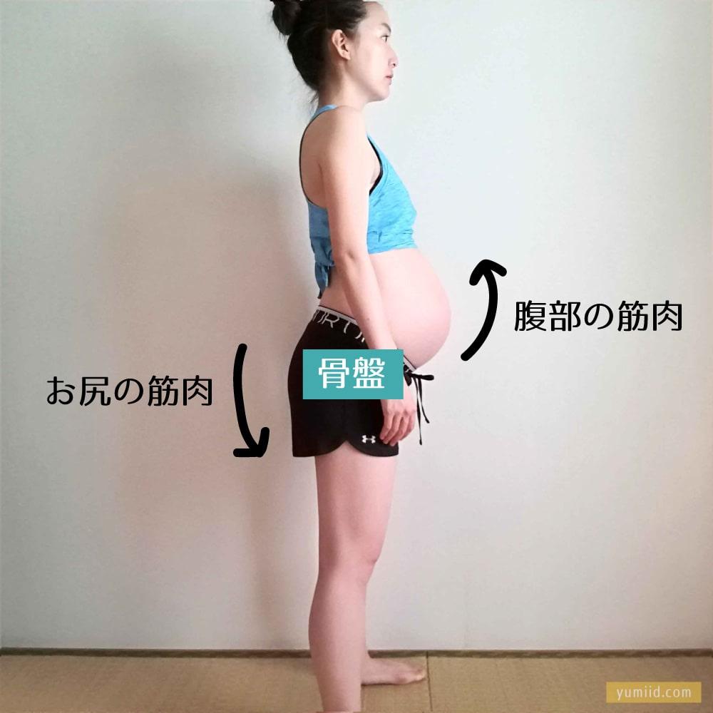 お尻の筋肉と腹部の筋肉は連動して骨盤を支える--妊娠中のお尻のトレーニング!妊婦さんがお尻を鍛えるべき理由とおすすめの筋トレ